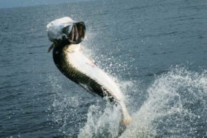Tarpon Nicaragua River Fishing