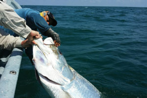 Tarpon River Fishing